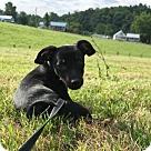 Adopt A Pet :: Fred Flintstone
