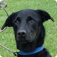 Adopt A Pet :: DT - Monroe, MI