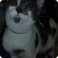Adopt A Pet :: Seymour - Hamburg, NY