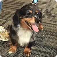 Adopt A Pet :: Duggy - Dayton, OH