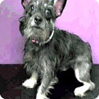 Adopt A Pet :: Katie-ADOPTION PENDING - Boulder, CO