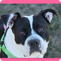 Adopt A Pet :: CJ - McDonough, GA