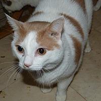 Adopt A Pet :: Vinny - Stafford, VA
