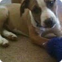 Adopt A Pet :: Joy - Justin, TX
