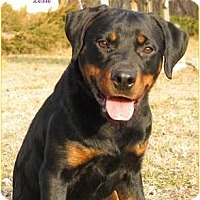 Adopt A Pet :: Lexie - Darlington, MD