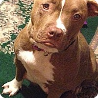 Adopt A Pet :: Ophelia - Bloomsburg, PA