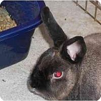 Adopt A Pet :: Summer - Williston, FL