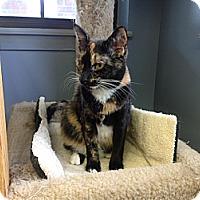 Adopt A Pet :: Dixie - Lake Charles, LA