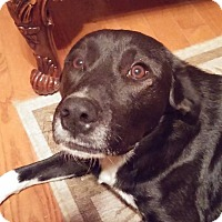 Adopt A Pet :: Sammy - Huntsville, AL