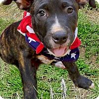 Adopt A Pet :: Spunkie  adoption pending - Sacramento, CA