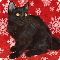 Adopt A Pet :: Kurli - Mesa, AZ