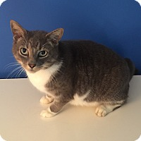 Adopt A Pet :: Danny - Summerville, SC