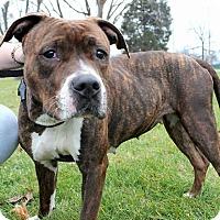 Adopt A Pet :: Jetta - Villa Park, IL