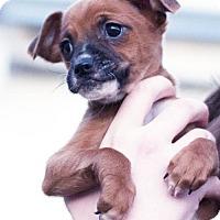 Adopt A Pet :: Eloise - San Diego, CA