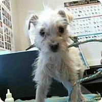 Adopt A Pet :: A669792 - Sacramento, CA