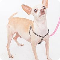Adopt A Pet :: Pedro - Jupiter, FL