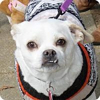 Adopt A Pet :: Mimi - Memphis, TN