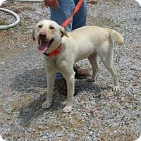 Adopt A Pet :: Rowdy - Aurora, IL