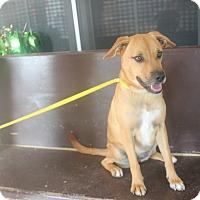 Adopt A Pet :: Rea - San Antonio, TX