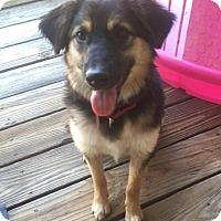 Adopt A Pet :: Linden - Enfield, CT