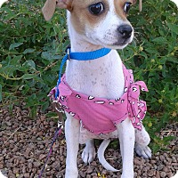 Adopt A Pet :: Winnie, formerly Whitney - Las Vegas, NV