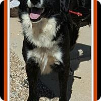 Adopt A Pet :: Nate - Tombstone, AZ