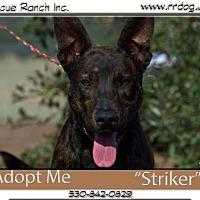 Adopt A Pet :: Stryker - Yreka, CA