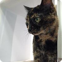Adopt A Pet :: Sarafine - Cumming, GA
