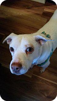 Terrier (Unknown Type, Medium)/Pointer Mix Dog for adoption in Seattle, Washington - Livingston