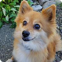 Adopt A Pet :: Princesa - Lompoc, CA