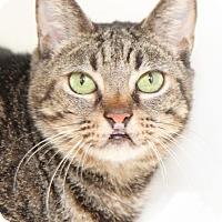 Adopt A Pet :: Holly - Encinitas, CA