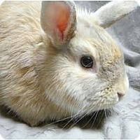Adopt A Pet :: Albus - Newport, DE