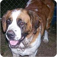 Adopt A Pet :: Jessie - Chandler, IN