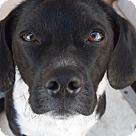 Adopt A Pet :: Nash