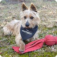 Adopt A Pet :: Canaan - Mocksville, NC