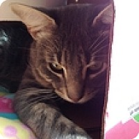 Adopt A Pet :: Ash Galt - Vancouver, BC