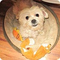 Adopt A Pet :: Duncan - Studio City, CA