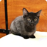 Adopt A Pet :: Bashful - Greensboro, GA