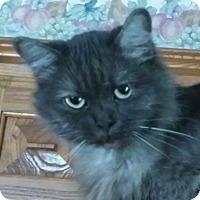 Adopt A Pet :: Princess - purebred - Ennis, TX