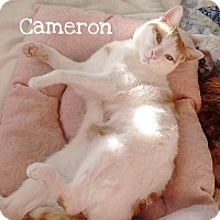 Adopt A Pet :: Cameron - Foothill Ranch, CA