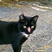 Adopt A Pet :: Gus - Bonita Springs, FL