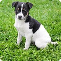 Adopt A Pet :: Bradley - New Oxford, PA