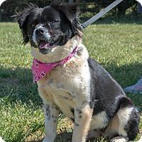 Adopt A Pet :: Jessica $125 - Seneca, SC