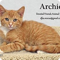 Adopt A Pet :: Archie - Ortonville, MI
