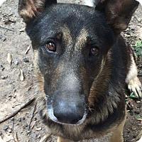 Adopt A Pet :: Delgado - Nashua, NH