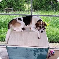 Adopt A Pet :: Baily - Jefferson, TX