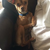 Adopt A Pet :: Frodo - Ashville, OH