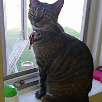 Adopt A Pet :: STAR - Owenboro, KY