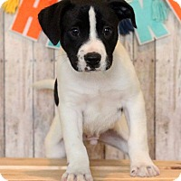 Adopt A Pet :: Fonda - Waldorf, MD