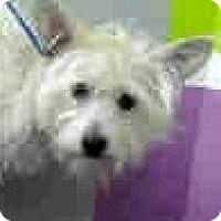 Adopt A Pet :: Ravi-ADOPTION PENDING - Boulder, CO